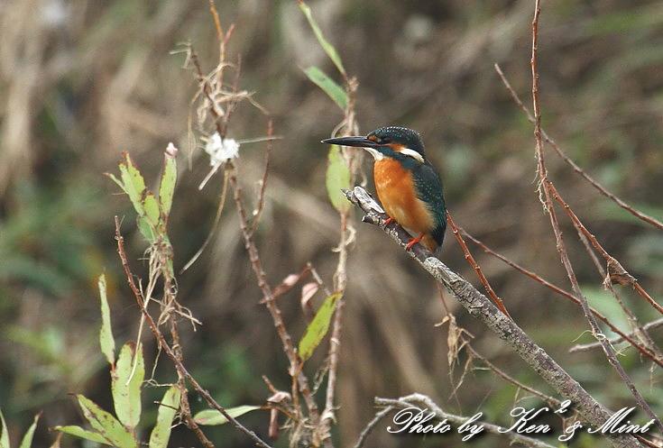 ミニオフ会で 会えた鳥さん達~Σ^) _e0218518_18482210.jpg