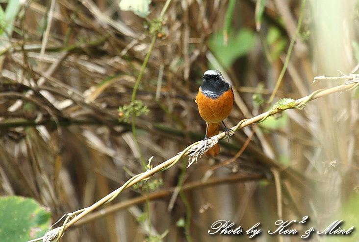ミニオフ会で 会えた鳥さん達~Σ^) _e0218518_18492139.jpg