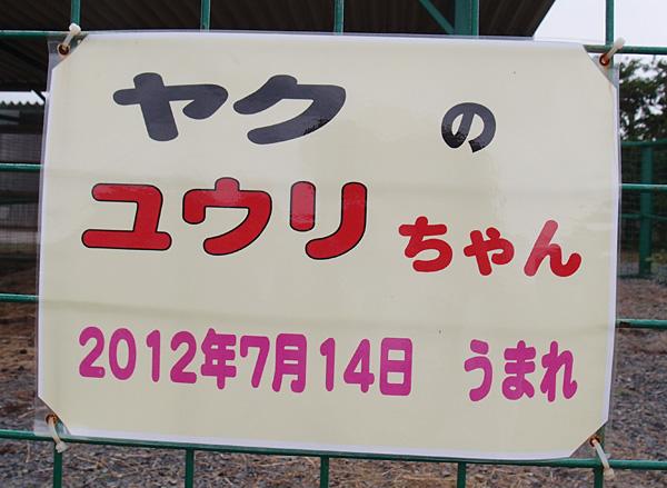 2013.7.23 岩手サファリ☆ヤクのユウリ 【yak】_f0250322_2155124.jpg