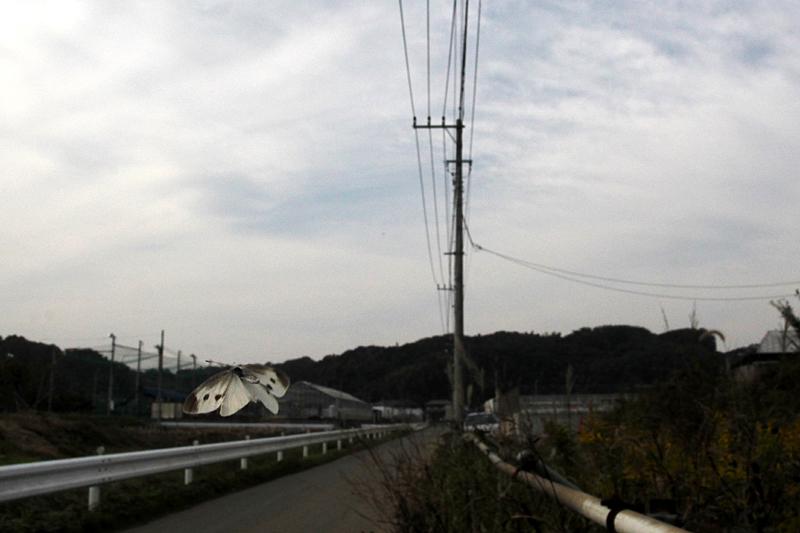 2013年11月上旬 神奈川県 そろそろ終わりかな_d0054625_8551818.jpg