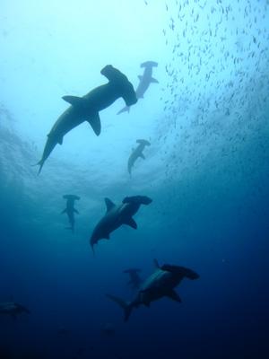 ガラパゴスの海 ダイビング編          GALAPAGOS_e0184067_22254473.jpg