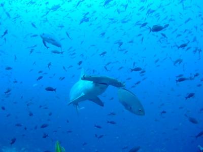 ガラパゴスの海 ダイビング編          GALAPAGOS_e0184067_22264121.jpg