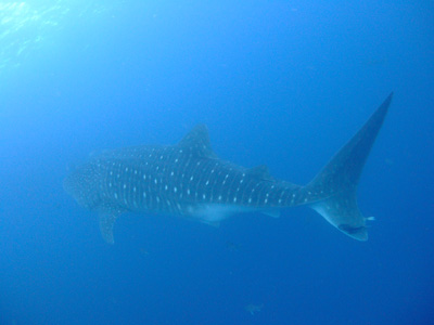 ガラパゴスの海 ダイビング編          GALAPAGOS_e0184067_22265162.jpg
