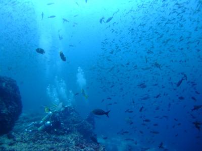 ガラパゴスの海 ダイビング編          GALAPAGOS_e0184067_2226784.jpg