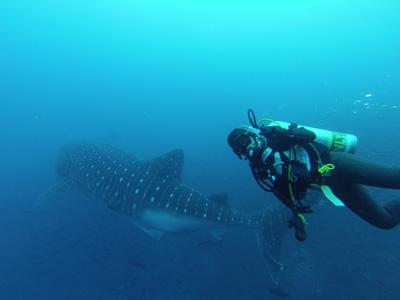 ガラパゴスの海 ダイビング編          GALAPAGOS_e0184067_2227177.jpg