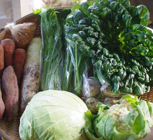 今週の野菜セット(11/5~11/9着)_c0110869_14374738.jpg
