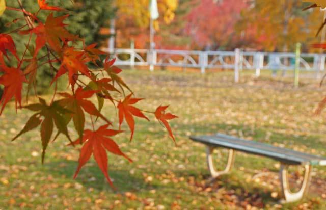 公園の紅葉 2_d0162994_17103886.jpg