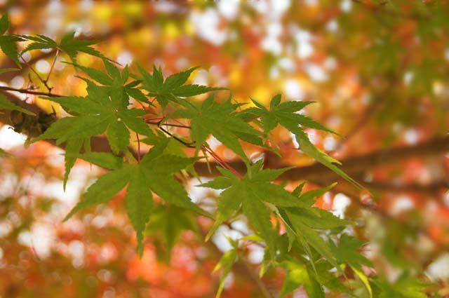 公園の紅葉 2_d0162994_1711434.jpg