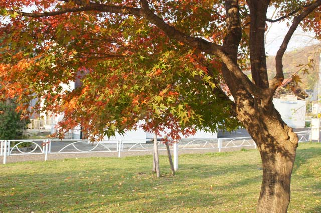 公園の紅葉 2_d0162994_1782645.jpg