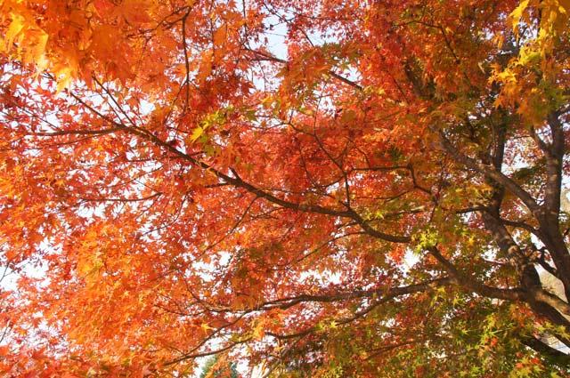 公園の紅葉 2_d0162994_179645.jpg