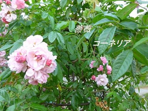 d0172010_60758.jpg
