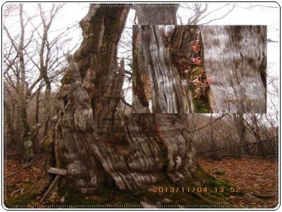 f0193521_1125366.jpg