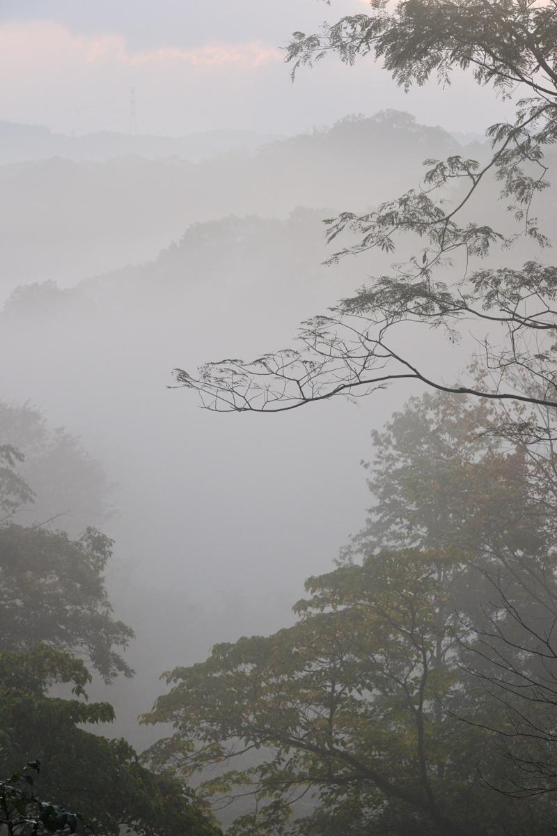 朝霧_c0220824_12583753.jpg