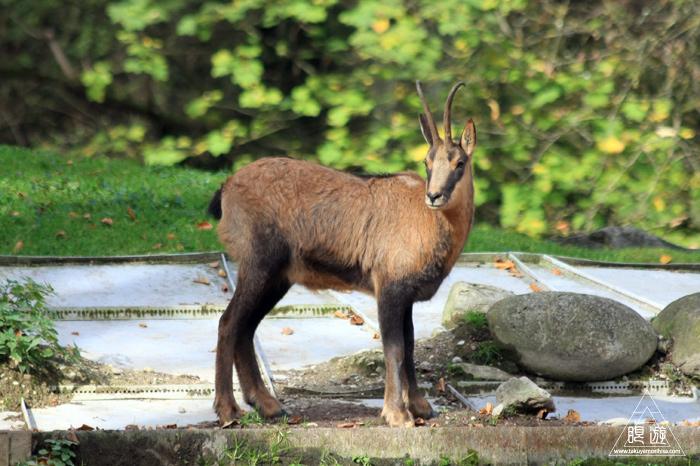 361 Hellabrunn Zoo ~ミュンヘンの動物園~_c0211532_1447586.jpg