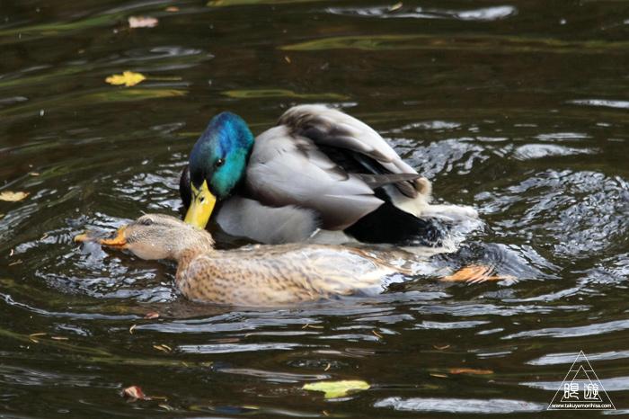 361 Hellabrunn Zoo ~ミュンヘンの動物園~_c0211532_18391024.jpg