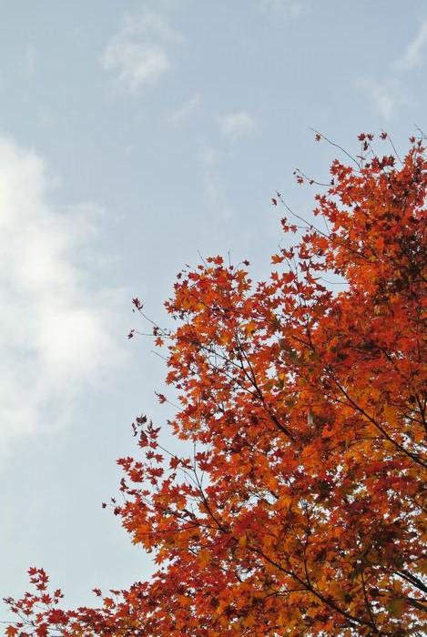 昭和記念公園で紅葉を楽しみました_e0089232_7565339.jpg