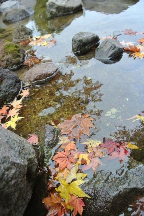 昭和記念公園で紅葉を楽しみました_e0089232_7575789.jpg