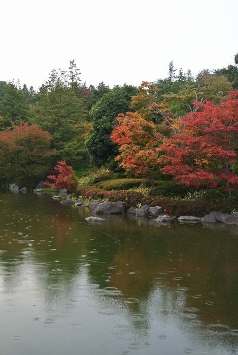昭和記念公園で紅葉を楽しみました_e0089232_7582662.jpg