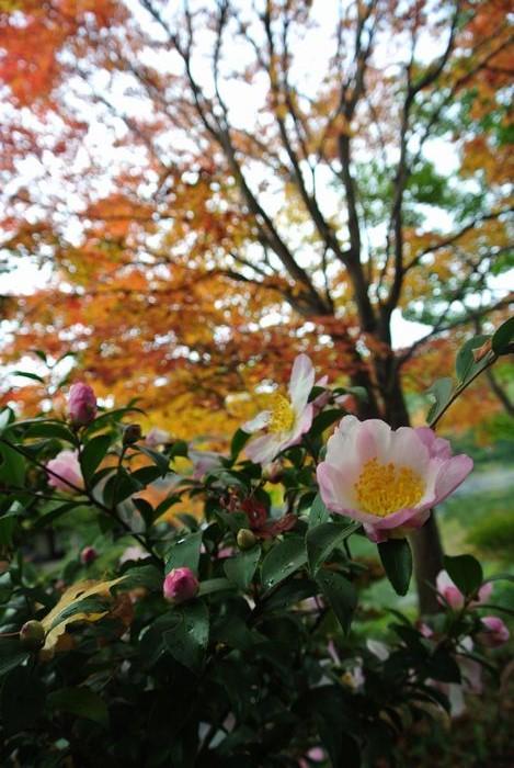 昭和記念公園で紅葉を楽しみました_e0089232_802674.jpg