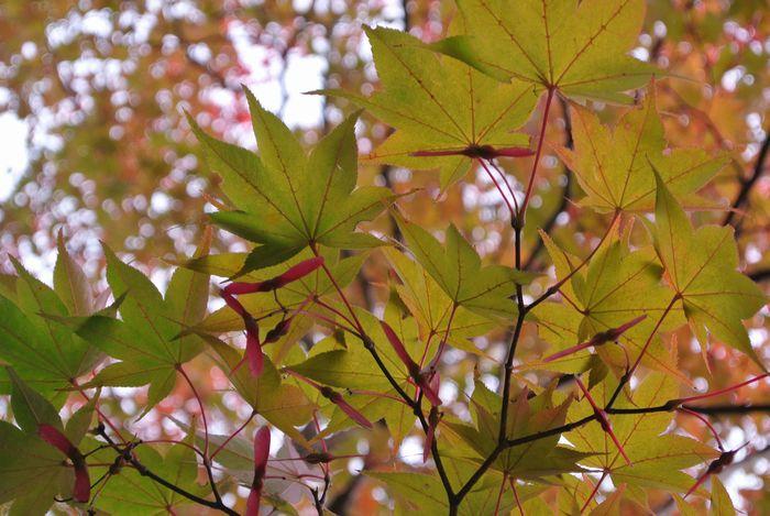 昭和記念公園で紅葉を楽しみました_e0089232_80526.jpg