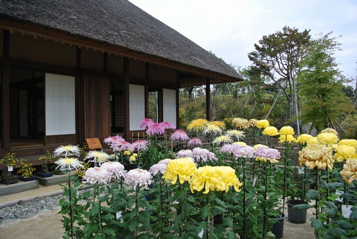 昭和記念公園で紅葉を楽しみました_e0089232_8101069.jpg