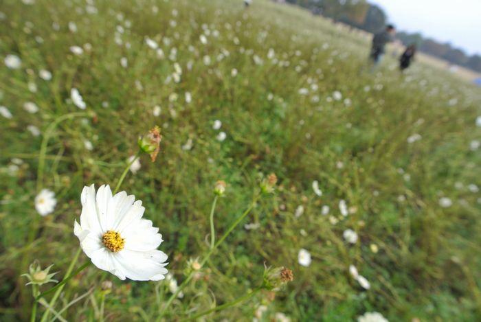 昭和記念公園で紅葉を楽しみました_e0089232_81297.jpg