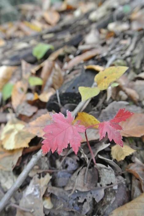 昭和記念公園で紅葉を楽しみました_e0089232_882023.jpg