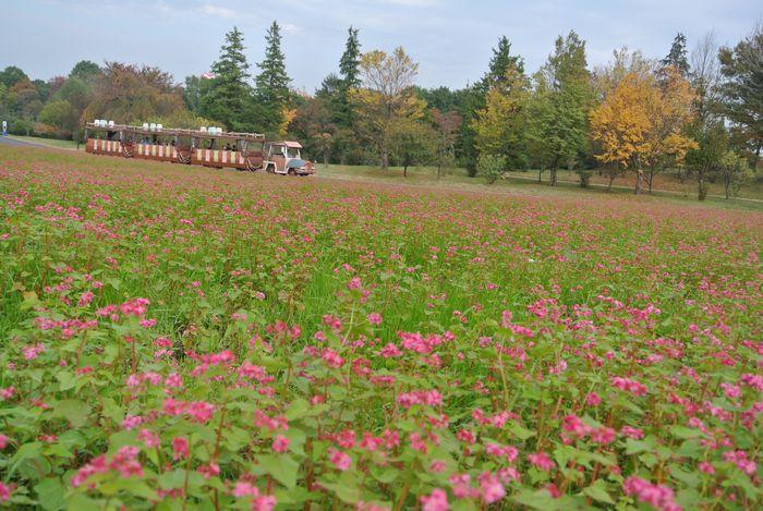 昭和記念公園で紅葉を楽しみました_e0089232_89693.jpg
