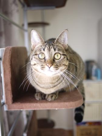猫のお友だち 八朔くん柚子ちゃん編。_a0143140_20403535.jpg
