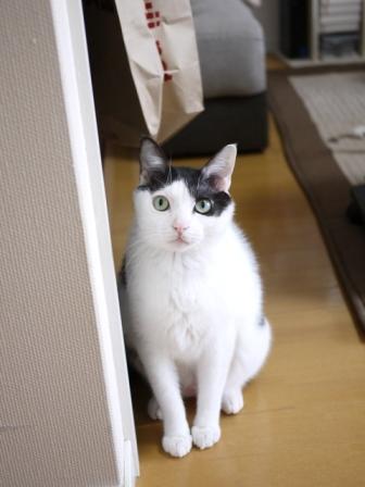 猫のお友だち 八朔くん柚子ちゃん編。_a0143140_2040561.jpg