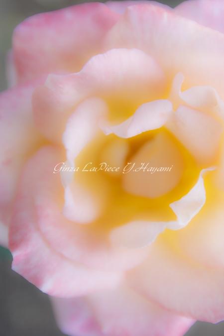 花のある風景 秋薔薇の花冠_b0133053_032458.jpg