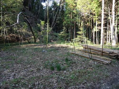 孝子の竹林整備が終了しました・・・定例活動日_c0108460_2325748.jpg
