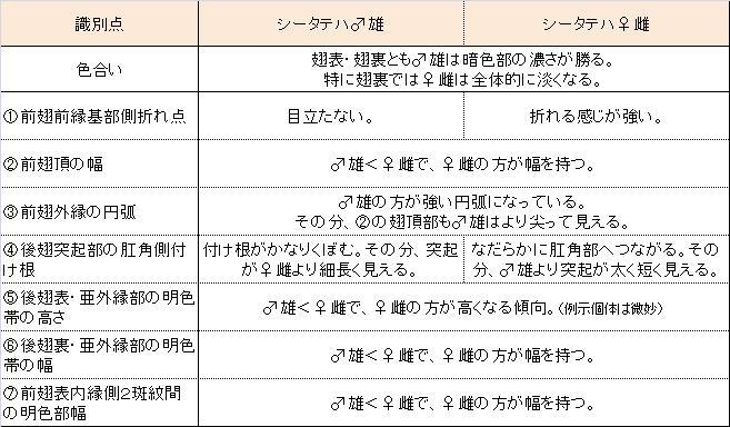 シータテハ  夏型を満喫。  2013.7.11-13北海道16_a0146869_5301898.jpg
