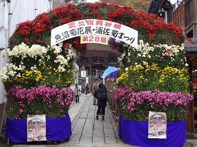 魚沼菊花展「浦佐きくまつり」_b0092684_1348496.jpg