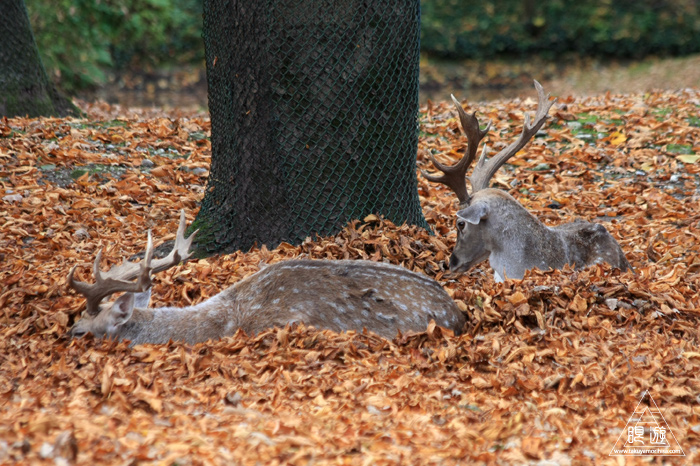 361 Hellabrunn Zoo ~ミュンヘンの動物園~_c0211532_2130871.jpg