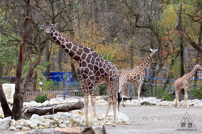 361 Hellabrunn Zoo ~ミュンヘンの動物園~_c0211532_21393814.jpg