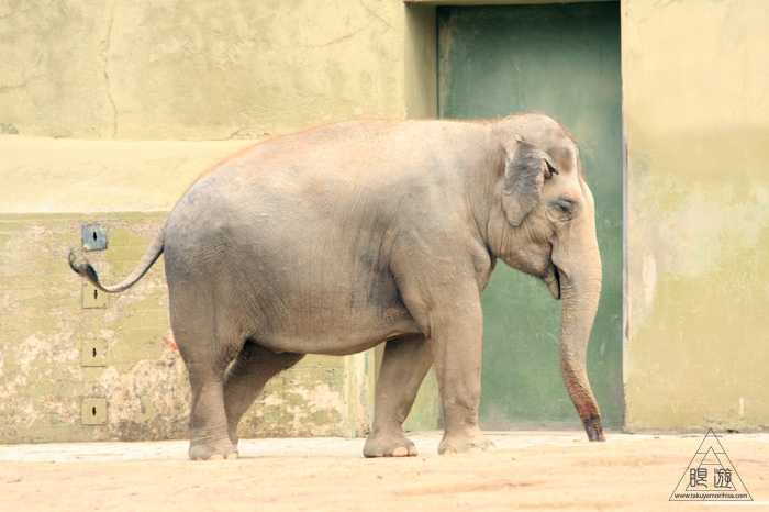 361 Hellabrunn Zoo ~ミュンヘンの動物園~_c0211532_21551056.jpg
