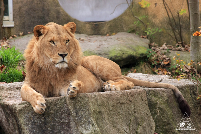 361 Hellabrunn Zoo ~ミュンヘンの動物園~_c0211532_21555299.jpg