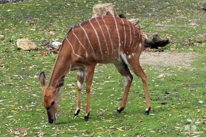 361 Hellabrunn Zoo ~ミュンヘンの動物園~_c0211532_21583238.jpg
