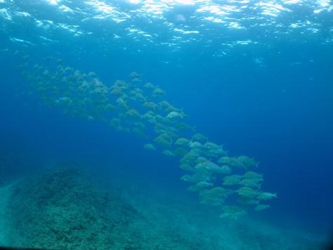 11月6日昨日と違って最高の海に変わりました。_c0070933_22263368.jpg