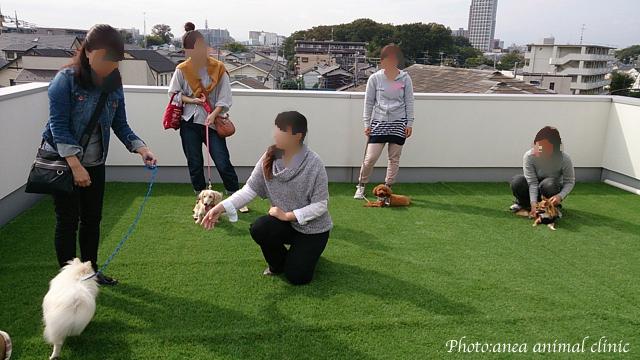 動物病院でのわんちゃんパーティー_c0099133_6555784.jpg