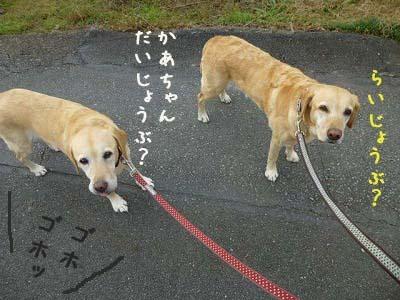 a0167836_17112011.jpg