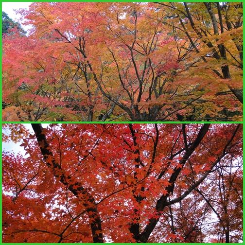 英彦山の紅葉_e0164643_223147.jpg