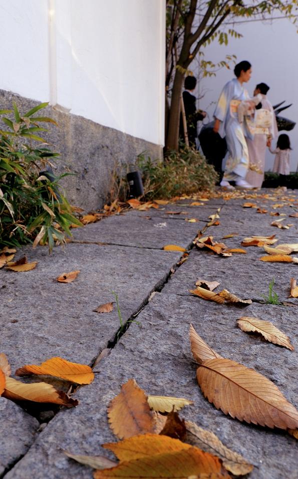落ち葉の季節_e0241944_11423226.jpg