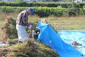 蕎麦の収穫_e0175370_12525768.jpg