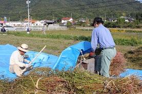 蕎麦の収穫_e0175370_1256098.jpg