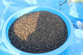 蕎麦の収穫_e0175370_12572121.jpg
