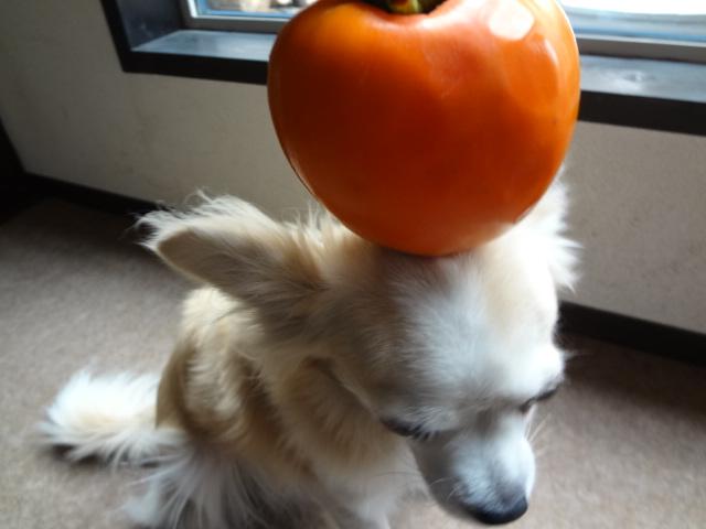 柿とレモン_f0148927_21491167.jpg