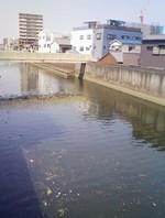 荒崎水害訴訟控訴審不当判決、そして・・・_f0197754_2274038.jpg