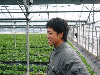 紅ほっぺ イチゴ一筋13年の親子の匠が育て上げる『紅ほっぺ』の開花(その2)_a0254656_15164988.jpg